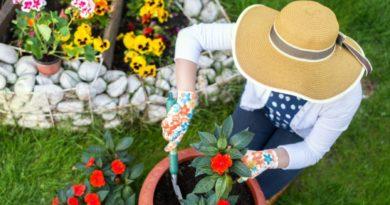 Strumenti da giardinaggio: cosa fare per coltivare la propria passione
